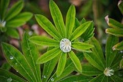 Na een de zomerregen macrofoto van waterdalingen (dauw) op de stammen en de bladeren van groene installaties Royalty-vrije Stock Afbeelding