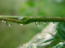 Na een regen. Royalty-vrije Stock Foto