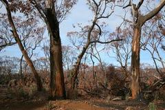 Na een wilde brand Australië Stock Afbeelding