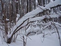 Na een Zware Sneeuwval Royalty-vrije Stock Afbeeldingen
