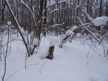 Na een Zware Sneeuwval Royalty-vrije Stock Fotografie