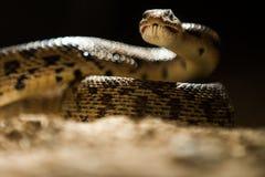 Na escuridão uma serpente está lá Imagens de Stock