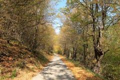 Na estrada através de Autumn Forest dourado, montanha de Balcãs, Bulgária Imagens de Stock