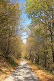 Na estrada através de Autumn Forest dourado, retrato, montanha de Balcãs, Bulgária Fotografia de Stock