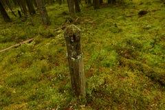 Na estrada de floresta coberto de vegetação permaneceu o marco miliário com épocas pre-revolucionárias Foto de Stock