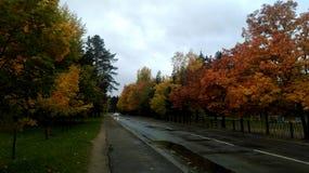 Na estrada estão crescendo árvores, fim do verão, outono imagem de stock