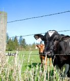 Na exploração agrícola Fotos de Stock