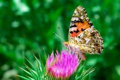 Na flor Imagens de Stock