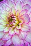Na flor Imagem de Stock