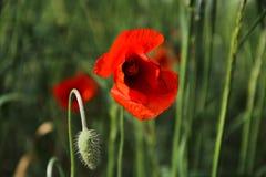 Na flor Fotografia de Stock