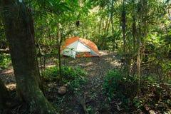 Na floresta úmida australiana Imagens de Stock Royalty Free