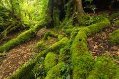 Na floresta úmida australiana Fotos de Stock
