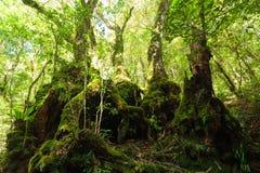 Na floresta úmida australiana Fotos de Stock Royalty Free