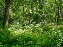 Na floresta Imagem de Stock