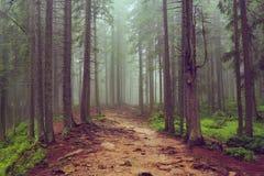 Na floresta foto de stock royalty free