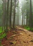 Na floresta fotos de stock royalty free