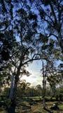 Na floresta Imagens de Stock Royalty Free