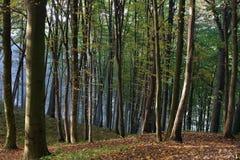 Na floresta Imagens de Stock