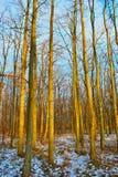 Na floresta Fotos de Stock