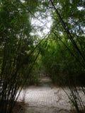 Na floresta de bambu Foto de Stock Royalty Free