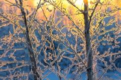 Na floresta do inverno imagem de stock royalty free
