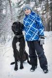 Na floresta do inverno, um menino com great dane fotografia de stock