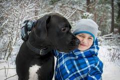 Na floresta do inverno, um menino com great dane fotos de stock royalty free