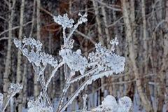 Na floresta, a grama seca sob a neve fotografia de stock royalty free