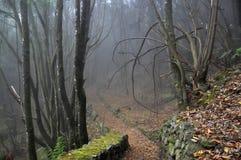 Na floresta nevoenta Fotografia de Stock