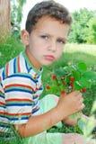 Na floresta, um menino que guarda um grupo das morangos. Fotografia de Stock Royalty Free