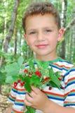 Na floresta, um menino que guardara um grupo das morangos. Fotografia de Stock