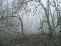 na fogy lasowym don& x27; blizna Obrazy Stock