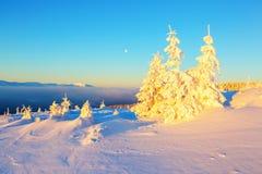 Na gazonie zakrywającym z śniegiem Zdjęcia Royalty Free