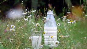 Na grama, entre as margaridas, o suporte uma garrafa do leite e um vidro do leite Close-up filme