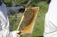 Na Honeycomb miodowa Pszczoła zdjęcie royalty free