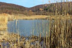 Na jeziorze Zdjęcie Stock
