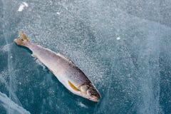 Na jeziorze zima połów Obrazy Royalty Free