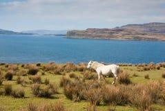 Na Keal del Loch Immagini Stock Libere da Diritti