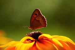 Na Kwiacie zbliżenie Motyl Zdjęcia Royalty Free