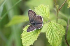 Na Kwiacie zbliżenie Motyl Obrazy Stock