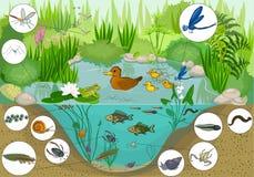 Na lagoa Imagem de Stock
