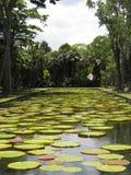 Na lagoa fotos de stock royalty free