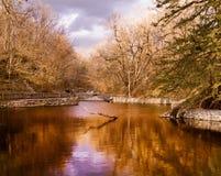 Na lagoa dourada fotos de stock