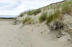 Na maneira à duna de Agilis Imagem de Stock