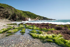Na maneira à ilha Cornualha Reino Unido Inglaterra do looe fotos de stock royalty free