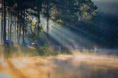 Na manhã, Pang Ung Forestry Plantations, Maehongson imagens de stock royalty free