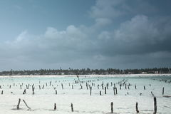 Na maré baixa em Zanzibar Foto de Stock Royalty Free