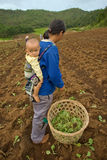 Na montanha uma mãe do grupo étnico de Hmong leva seu filho, durante a plantação da couve Fotos de Stock