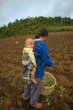 Na montanha uma mãe do grupo étnico de Hmong leva seu filho, durante a plantação da couve Fotografia de Stock