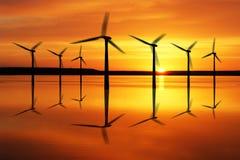 na morzu rośliny władzy wiatr Zdjęcie Royalty Free
